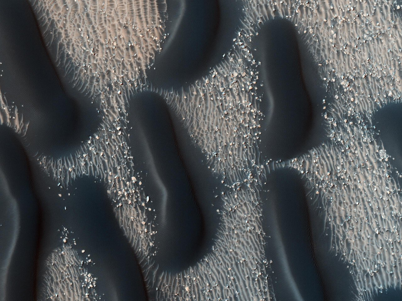 Dark dune fields of Proctor Crater, Mars